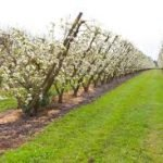 J.S. Orchards, Inc.
