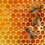 Miller's Honey Farms, Inc.